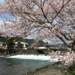 桜のおススメ観光スポット~「水と桜」編~