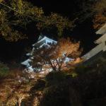 夜の郡上八幡城ライトアップ