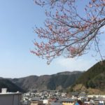 郡上八幡の桜開花状況